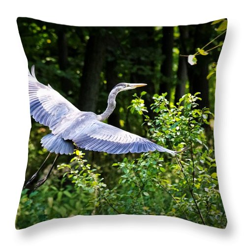 Blue Heron Throw Pillow featuring the photograph Blue Heron On The Move by Lawrence Golla