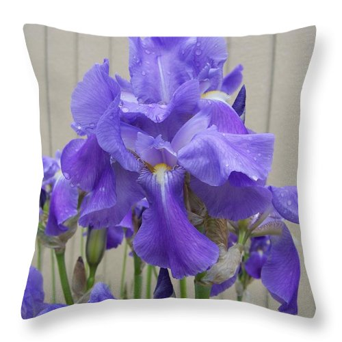Flowers Throw Pillow featuring the photograph Blue Iris by Laurie Kidd
