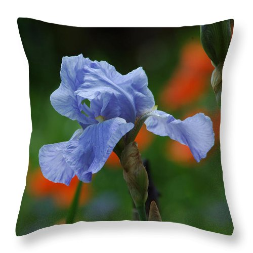 Iris Throw Pillow featuring the photograph Blue Iris by Linda Murphy