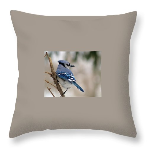 Blue Jay Throw Pillow featuring the photograph Blue Jay by Gaby Swanson
