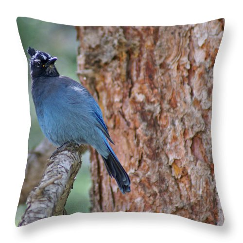 Blue Jay Throw Pillow featuring the photograph Blue Jay by Heather Coen