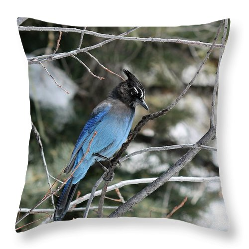 Nature Throw Pillow featuring the photograph Blue Jay by Lisa Spero