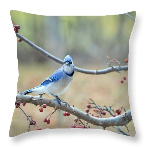 Spring Throw Pillow featuring the photograph Blue Jay Poses In Crab Apple Tree by Lena Hatch