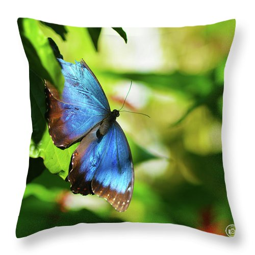 Blue Morpho Throw Pillow featuring the photograph Blue Morpho Butterfly by Sally Sperry