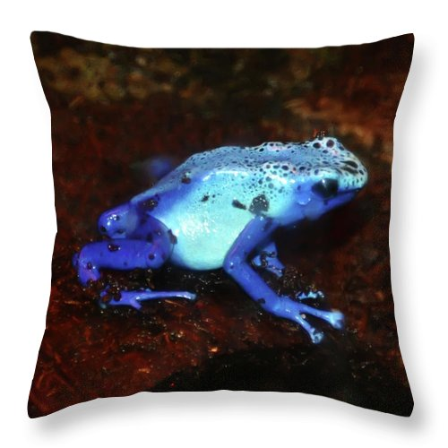 Blue Throw Pillow featuring the photograph Blue Poison Dart Frog - Dendrobates Azureus by Bill Cannon