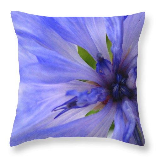 Flower Throw Pillow featuring the photograph Blue Princess by Rhonda Barrett