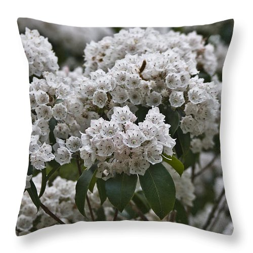 Kalmia Throw Pillow featuring the photograph Blue Ridge Mountain Laurel by Teresa Mucha