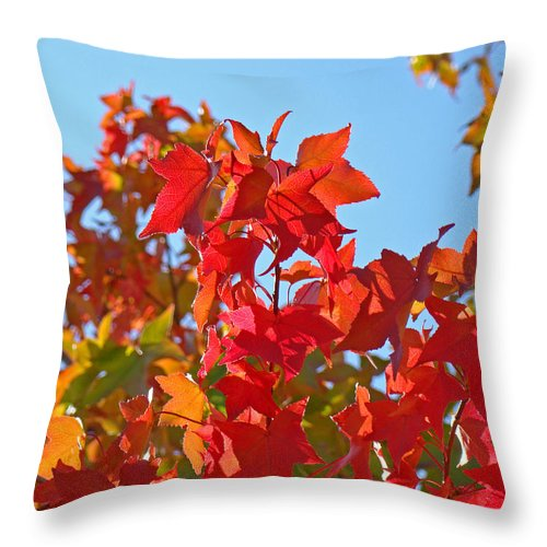 Autumn Throw Pillow featuring the photograph Blue Sky Autumn Art Prints Colorful Fall Tree Leaves Baslee by Baslee Troutman