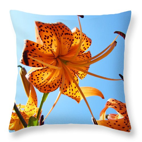 Lilies Throw Pillow featuring the photograph Blue Sky Tiger Lily Floral Garden Art Prints Baslee Troutman by Baslee Troutman
