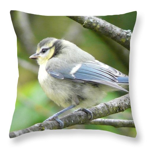 Bird Throw Pillow featuring the photograph Blue Tit by Valerie Ornstein