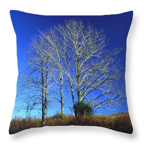 Landscape Throw Pillow featuring the photograph Blue Tree in Tennessee by Randy Oberg