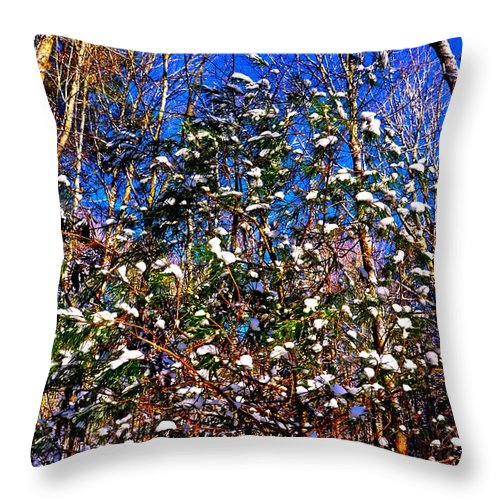 Forest Throw Pillow featuring the photograph Blue Winter by Dale Chapel