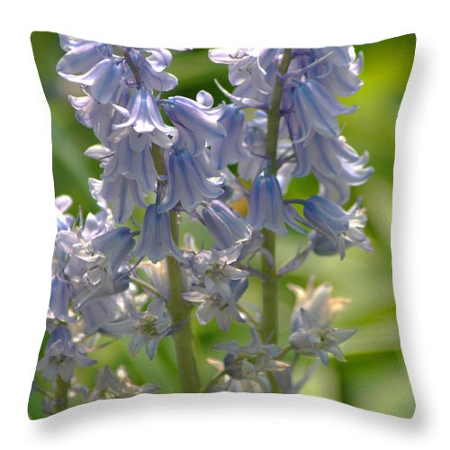 Bluebell Throw Pillow featuring the photograph Bluebell by Chris Day