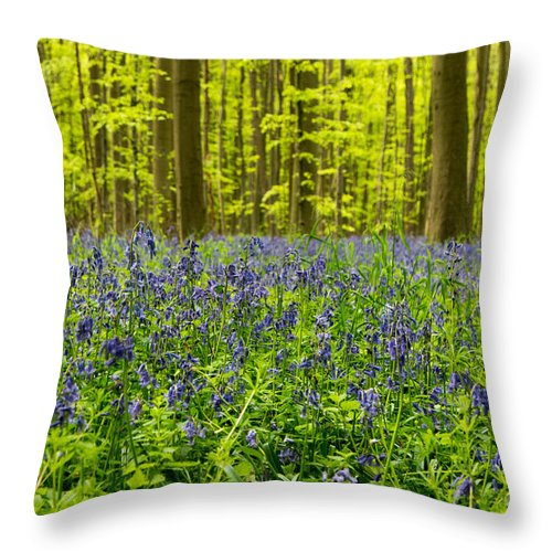 Bluebell Forest Path Throw Pillow featuring the photograph Bluebell Wood by Brothers Beerens