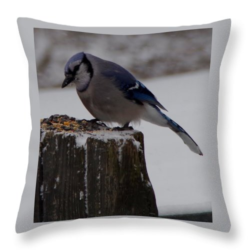 Throw Pillow featuring the photograph Bluejay by Julianne Minor