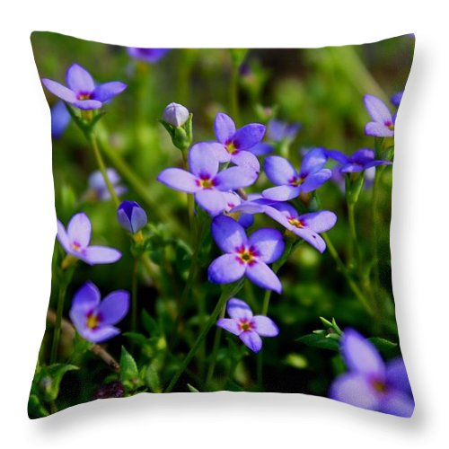 Bluet Throw Pillow featuring the photograph Bluets by Kathryn Meyer