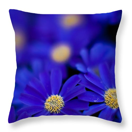 Flower Throw Pillow featuring the photograph Bluey Gerbera by Mike Reid