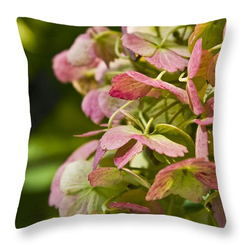 Hydrangea Throw Pillow featuring the photograph Blushing Hydrangea by Valerie Fuqua
