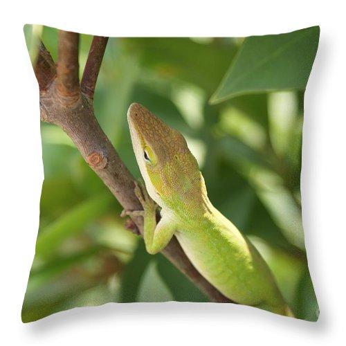 Lizard Throw Pillow featuring the photograph Blusing Lizard by Shelley Jones