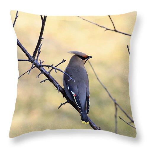Waxwing Throw Pillow featuring the photograph Bohemian Cedar Waxwing In Spring by Deborah Benoit