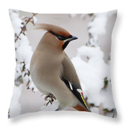 Fn Throw Pillow featuring the photograph Bohemian Waxwing Bombycilla Garrulus by Jan Vermeer