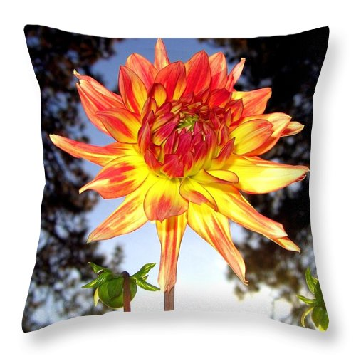 Dahlia Throw Pillow featuring the photograph Bold And Beautiful by Will Borden