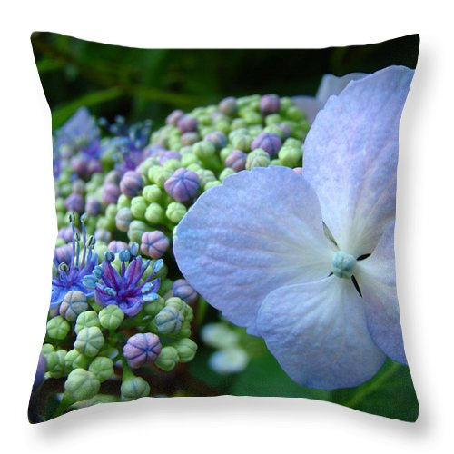 Hydrangea Throw Pillow featuring the photograph Botanical Garden Blue Hydrangea Flowers Baslee Troutman by Baslee Troutman