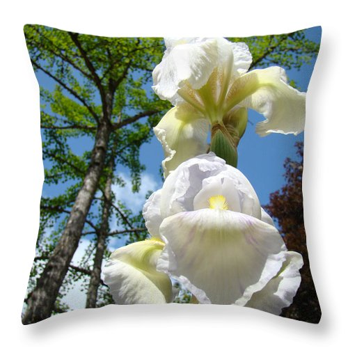 Iris Throw Pillow featuring the photograph Botanical Landscape Trees Blue Sky White Irises Iris Flowers by Baslee Troutman