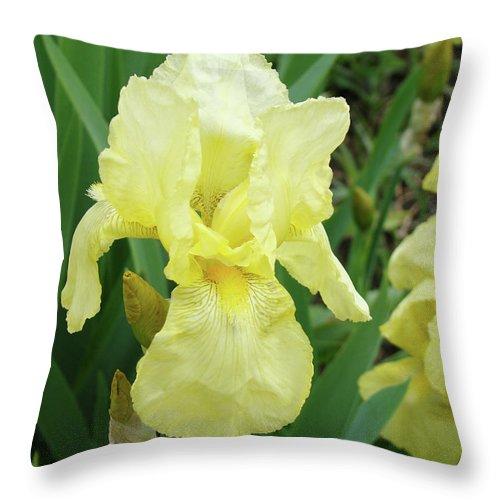 Iris Throw Pillow featuring the photograph Botanical Yellow Iris Flower Summer Floral Art Baslee Troutman by Baslee Troutman