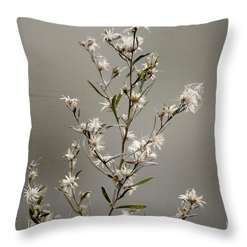 Flower Throw Pillow featuring the photograph Botswana Wildflower by Kay Brewer