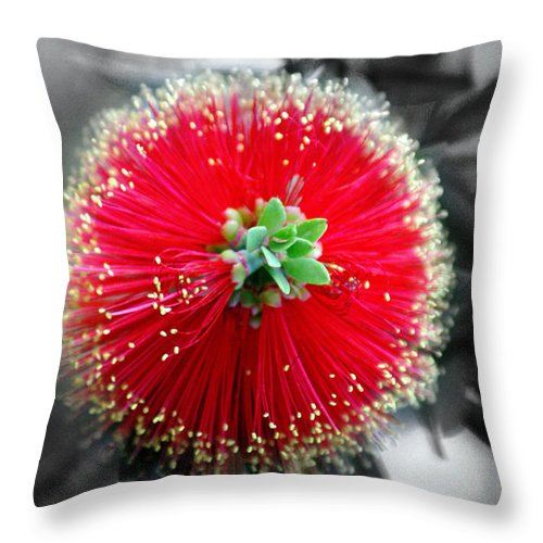 Nature Throw Pillow featuring the photograph Bottlebrush Callistemon by Holly Kempe