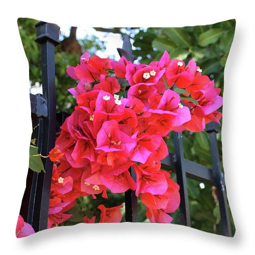 Bougainvillea Throw Pillow featuring the photograph Bougainvillea On Southern Fence by Carol Groenen
