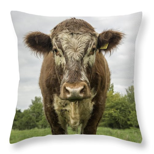 Cow Throw Pillow featuring the photograph Bovine Beauty 1 by Wendy Chapman