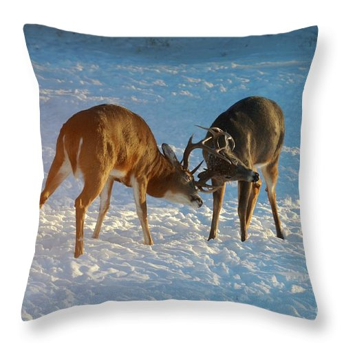 White Tailed Deer Throw Pillow featuring the photograph Boys Will Be Boys by Sandra Updyke