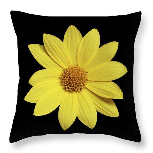 Flowers Throw Pillow featuring the photograph bp2 by Krisjan Krafchak
