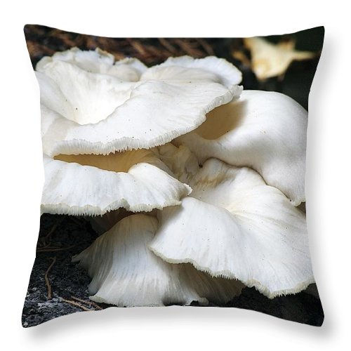 Nature Throw Pillow featuring the photograph Bracket Fungus by Kenneth Albin