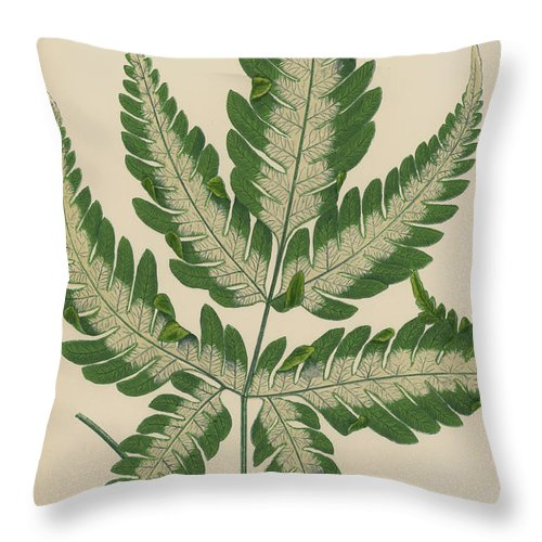 Brake Fern Throw Pillow For Sale By English School