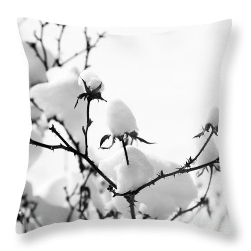 Branches Throw Pillow featuring the photograph Branches by Amanda Barcon
