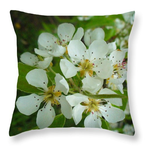 Nature Throw Pillow featuring the photograph Brandy In Bud On The Pear Tree by Peggy King