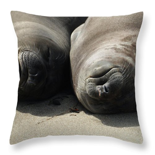 Elephant Seals Throw Pillow featuring the photograph Break Time by Ernie Echols