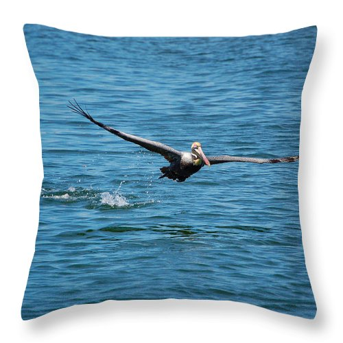 Pelican Throw Pillow featuring the photograph Breakfast Flight by Donna Proctor