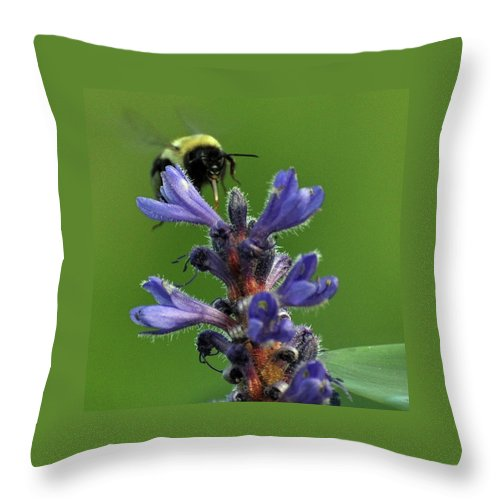 Bumble Bee Throw Pillow featuring the photograph Bumble Bee Breakfast by Glenn Gordon