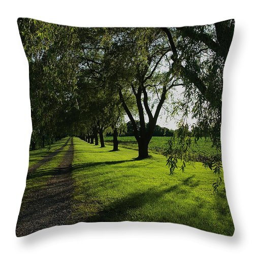 Summer Throw Pillow featuring the photograph Breezy Summer Sunset Wispy Willows by Steve Somerville