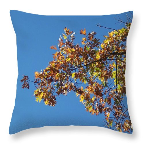 Branch Throw Pillow featuring the photograph Bright Autumn Branch by Michelle Miron-Rebbe