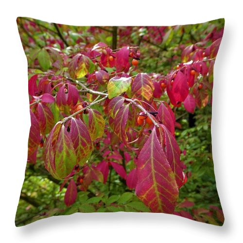 Autumn Leaves Red Throw Pillow featuring the photograph Bright Change by The Sangsters