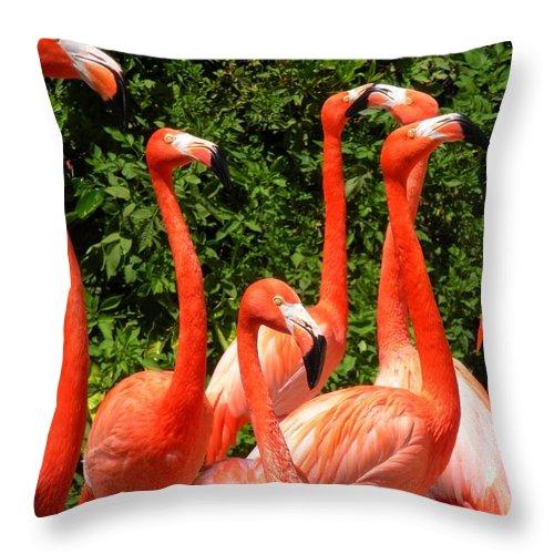 Flamingo Throw Pillow featuring the photograph Bright Flamingos by Maria Bonnier-Perez