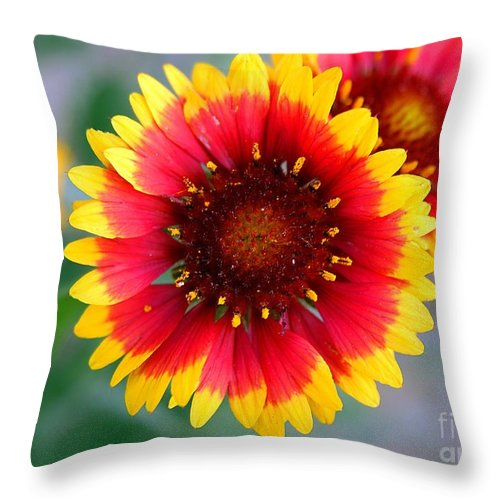 Clay Throw Pillow featuring the photograph Bright Floral Day by Clayton Bruster