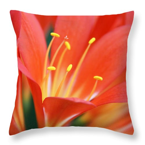Clivia Throw Pillow featuring the photograph Bright Orange Clivia Miniata Flower by Jennie Marie Schell
