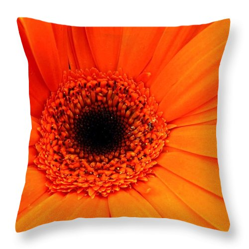 Flower Throw Pillow featuring the photograph Bright Red by Rhonda Barrett