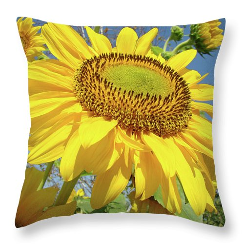 Sunflower Throw Pillow featuring the photograph Bright Sunny Happy Yellow Sunflower 10 Sun Flowers Art Prints Baslee Troutman by Baslee Troutman